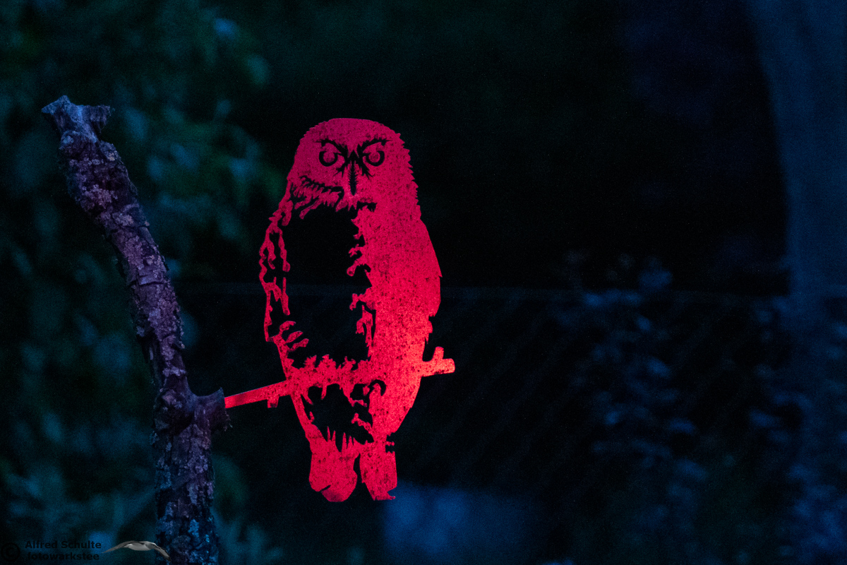 Owls - Strigiformes